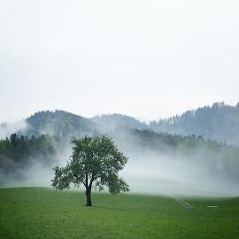 Foggy landscape by Yeva Zak - Landscapes Weather ( fog. foggy. mist. misty. mood. tree. green. landscape. weather. )