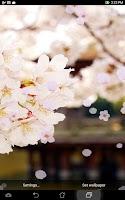 Screenshot of Cherry Flowers Live Wallpaper