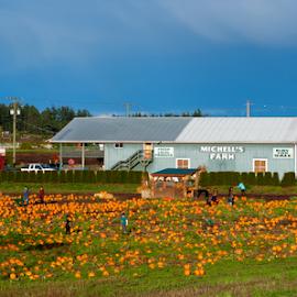 Mitchell Farm by Keith Sutherland - Landscapes Prairies, Meadows & Fields ( field, farm, barn, pumpkin )