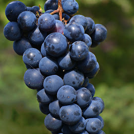 Grapes by Ad Spruijt - Nature Up Close Gardens & Produce ( grapes )