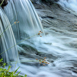 stream by Hitesh Sureja - Nature Up Close Water