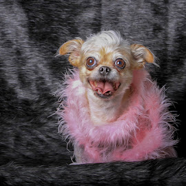 Cookie  by Janice Carabine - Animals - Dogs Portraits ( dress up, pink, cute, dog, portrait )