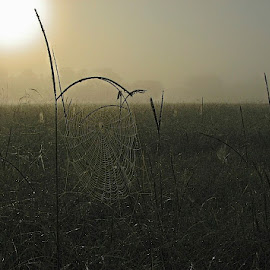 Fog by Zeralda La Grange - Nature Up Close Webs ( #landscape, #web, #fog, #morning, #sunrise )