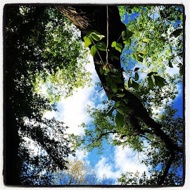 Does looking up ever disorient you? ~ by Bridget Wegrzyn - Nature Up Close Trees & Bushes ( thebrygida )