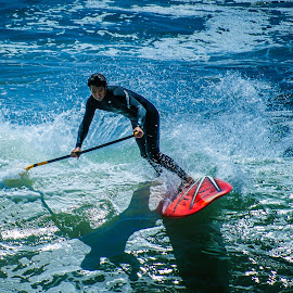 SUP Surfing by David Freese - Sports & Fitness Surfing ( surfing, california, sup )