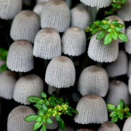 in between by Adjie Tjokrosoedarmo - Nature Up Close Mushrooms & Fungi ( selective color, pwc )