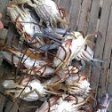 crabs(kasag in philippines)