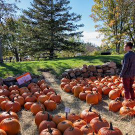 Fall Family Foto by David Stone - People Family ( farm, family, pumpkins, trees, children, kids, photography )