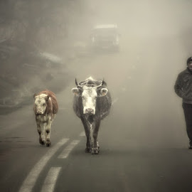 Trio on the road by Rucsandra Calin - People Street & Candids ( animals, fog, street, people )
