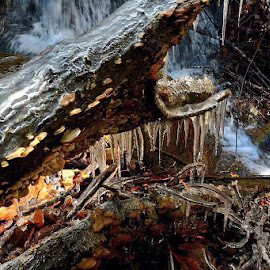 by Brandy Muller - Nature Up Close Trees & Bushes ( tree, ice, waterfall, icicles, fungus, frozen, rainbow )