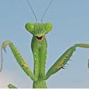 Mantis~