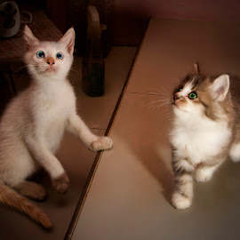 Yuki and Bubu by Ari Wid - Animals - Cats Kittens ( baby, young, animal )
