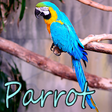 Theme eXperiart - Parrot