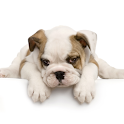 Guess The Puppy Breed Trivia icon