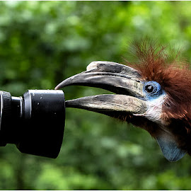 Stop you Paparazzi !!! by Renos Hadjikyriacou - Animals Birds ( animals, birds )