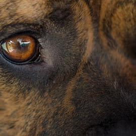 A Dog's Eye View by Esther Visser - Animals - Dogs Portraits