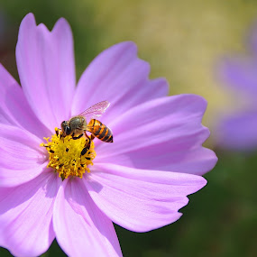 Enjoy... by Leka Huie - Flowers Single Flower ( bee, flower,  )