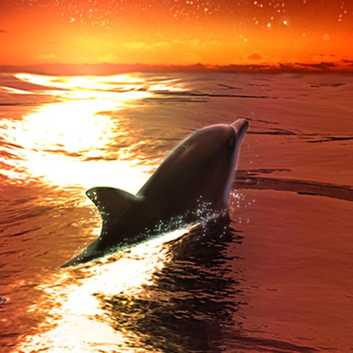 Dolphin -Tiger's Eye- LOGO-APP點子
