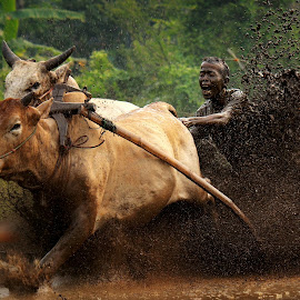 Pacu Jawi by Ed Nofri - Sports & Fitness Rodeo/Bull Riding
