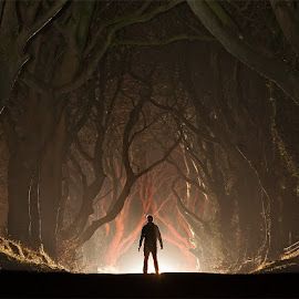 'Encounters' by Brens Photo's - Landscapes Travel ( ireland, armoy, dark hedges, antrim, landscape, light )