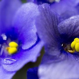 Purple flowers by Jean Bogdan Dumitru - Novices Only Macro