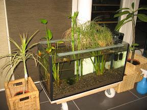 Projekt greengras und bambusbecken for Wasserpflanzen ikea