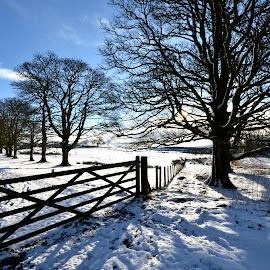 Snowy Park by Wendy Milne - City,  Street & Park  City Parks ( scotland, winter, park, snow, gate )