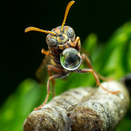 Wasp & Water Bubble by Carrot Lim - Animals Insects & Spiders