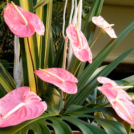 Heart flowers by Donna Probasco - Novices Only Flowers & Plants (  )