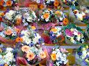 Fotos Gratis  Naturaleza - Flores - Tienda
