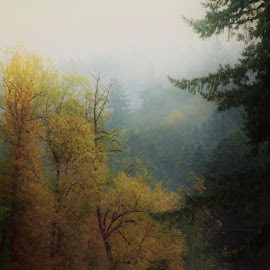 Misty Morning by Christy  Hidalgo - Landscapes Forests ( farm, pasture, foggy, nature, fall colors, fog, autumn, colors, fall, cow, trees, misty )