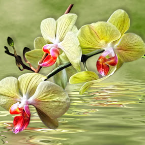 by Angelica Glen - Novices Only Flowers & Plants ( water, art, greetings, card, flowers, reflectionj,  )