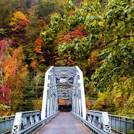 Bridge Lines by Michelle Nolan - Buildings & Architecture Bridges & Suspended Structures ( fall, lines, view, bridge, wv )