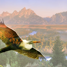 Dreams of the Tetons by Jeff Clow - Digital Art Animals ( flying, flight, mountains, nature, wyoming, usa, tetons, birds, egret )