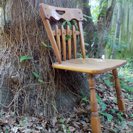pull up a chair by Jessica Newland - Artistic Objects Furniture ( nature, tree, vines, furniture, broken chair, Chair, Chairs, Sitting )