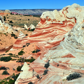 the alien landscape of White Pockets by Terry Niec - Nature Up Close Rock & Stone ( sand, white pockets, formations, red rock, sandstone, vermilion cliffs,  )