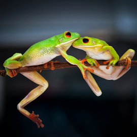 by Robert Cinega - Animals Amphibians ( #GARYFONGPETS, #SHOWUSYOURPETS )