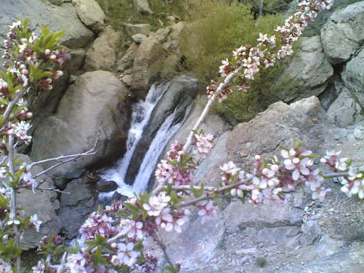 شکوفه  و آبشار قبل شیرپلا