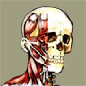 Flash Anatomy Head Neck - Free | FREE Android app market