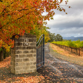 Welcome to my Vineyard by Lee Jorgensen - Landscapes Prairies, Meadows & Fields ( vines, fall, leaves, vineayrd, napa,  )