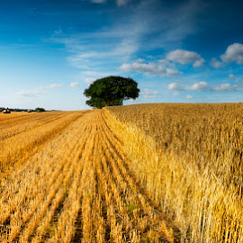 Unharvested by Ian Taylor - Landscapes Prairies, Meadows & Fields ( field, sky, straw, summer, bales, harvest, landscape )