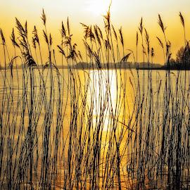 sunset by Tomasz Marciniak - Landscapes Sunsets & Sunrises ( winter, afternoon, sunset, lake, poland )
