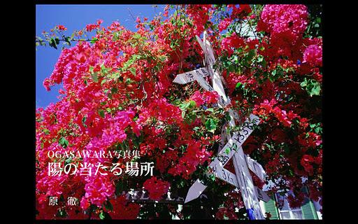 小笠原写真集『陽の当たる場所』ムービ付き(無料版)