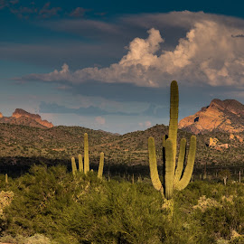 Arizona by Joe Faherty - Landscapes Deserts