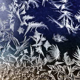 Jack Frost Returns by Doug & Coleen Walkey - Abstract Fine Art ( macro, winter, cold, ice, frost, glass )