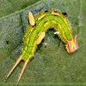 caterpillar with parasites