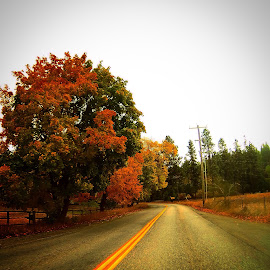 Fall tree colors by Joe Thola - Instagram & Mobile Instagram ( #gopro #goprohero #goprohero3 #pnwleaf #pnw #libertylakewa )