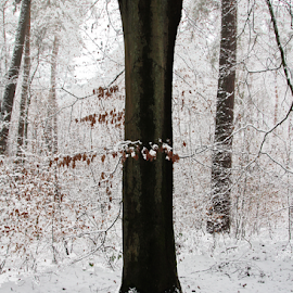 Snow in the forrest by Renée Politzer Nass - Illustration Flowers & Nature ( tree, snowb, white, leeves )