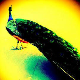 Magic Peacock  by Sam Ogrady - Abstract Macro ( creativity, lighting, art, artistic, purple, mood factory, lights, color, fun )