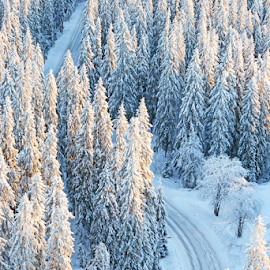 Finnish forest by Mia Ikonen - Landscapes Forests ( spruces, winter, finland, forest, road )
